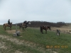 Buckeye GSPC - Spring Field Trial