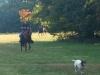 Horse-Back-Trial-Sept-2020