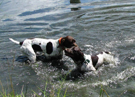 Smitty telling his brother It\'s about time you learned to swim.